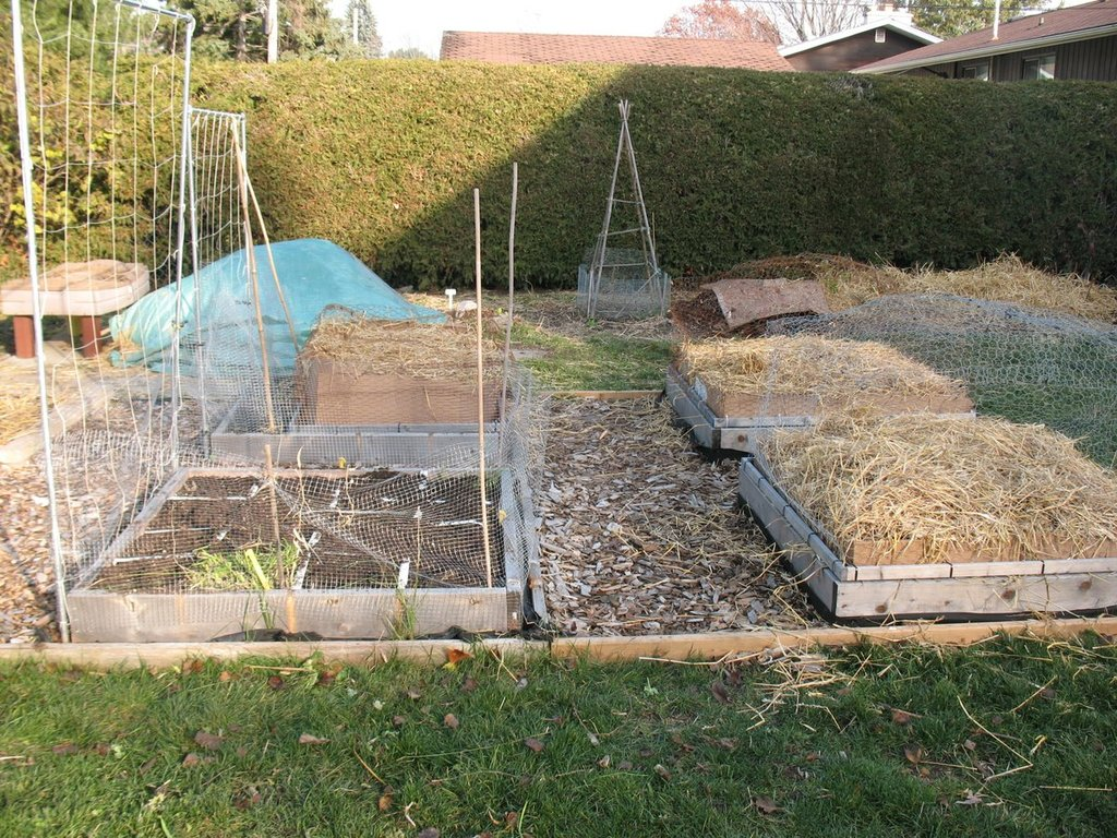 Topics tagged under 2 on Square Foot Gardening Forum - Page 3 IMG_3168_zpskmtgzjkp