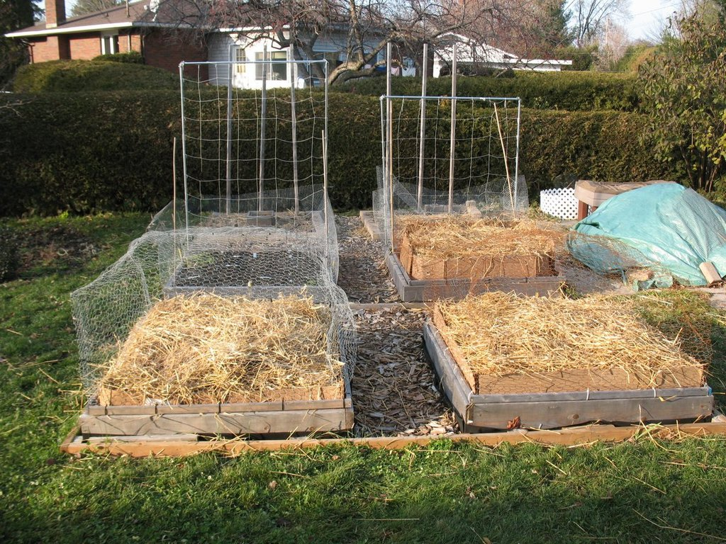 Topics tagged under 2 on Square Foot Gardening Forum - Page 3 IMG_3176_zps0vr8wzmr