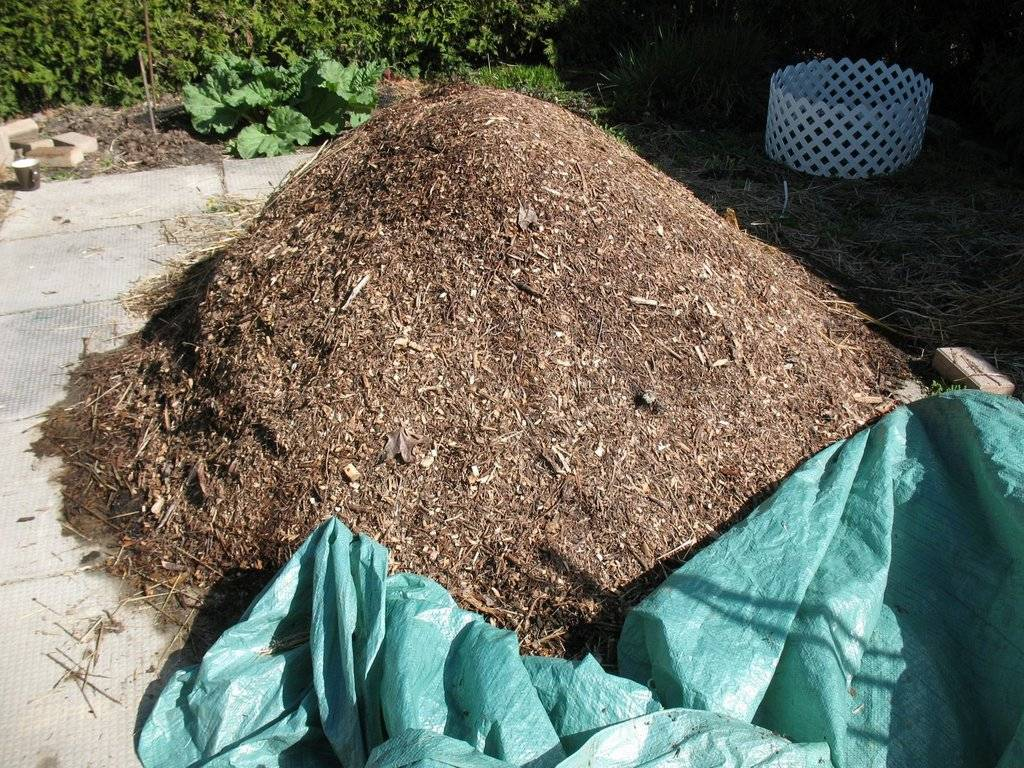 Topics tagged under 2 on Square Foot Gardening Forum - Page 2 IMG_3705_zpswzd17isd