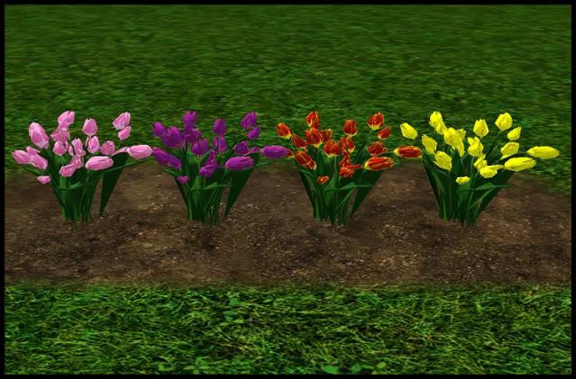 Tulips 1-4
