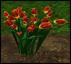 Tulips 3-3