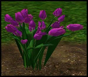 Tulips 4-4