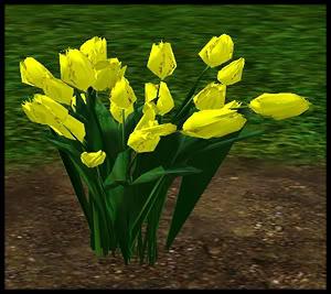 Tulips 5-4