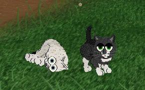 Kitty cats! LOL