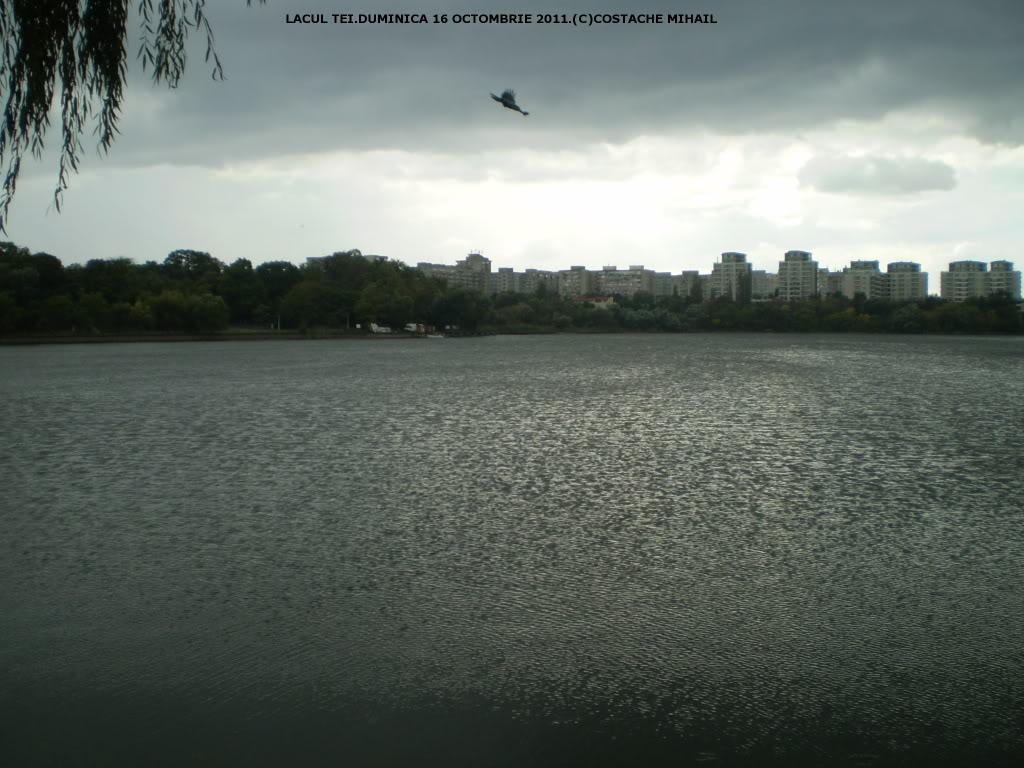 LACUL TEI - Pagina 2 P1010130