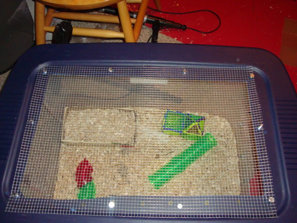 New mouse cage 005