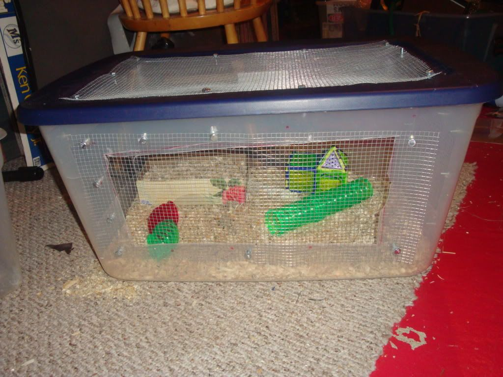 New mouse cage 006