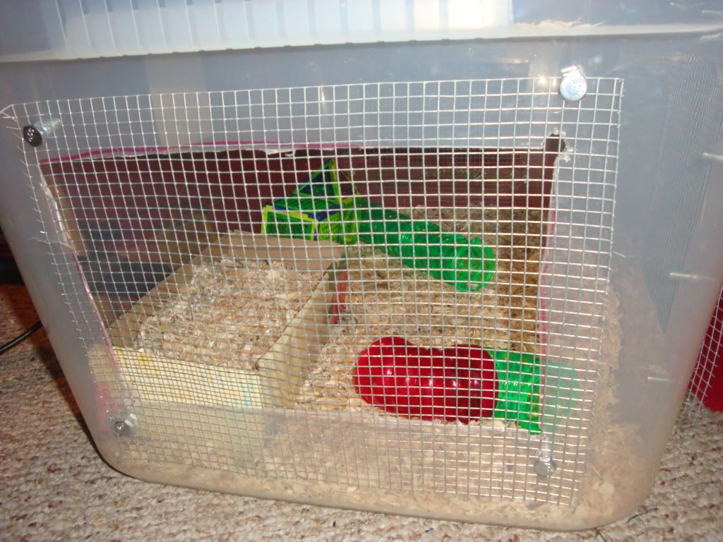 New mouse cage 008