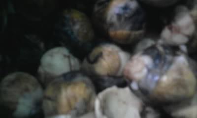 """Chiến dịch """"Máu nhuộm đường Văn Thân"""" diễn ra vào ngày 28/08/2011 Photo0196"""