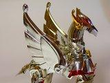 Pegasus Seya Th_P1160021