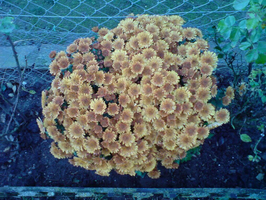 Motiv fotografiranja: Biljke, Cvijeće, Cvijet, Drveće... DSC00176