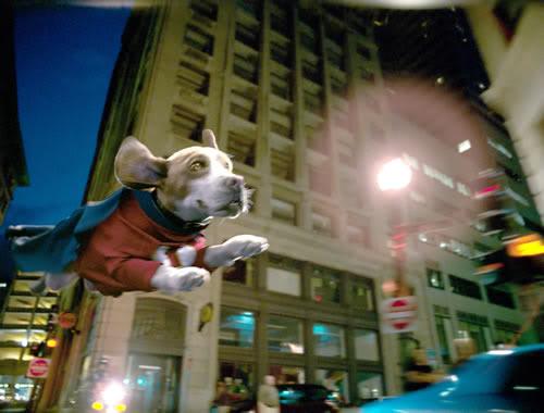 Superdog (Comedia) 8832e2d9