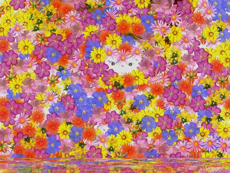 Flower Wallpapers  Wallpaper-AvaFlowers
