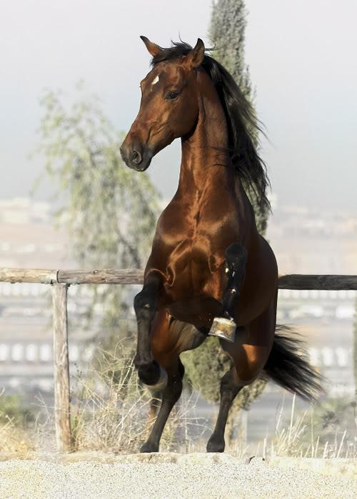 My horses :] Gavilanverticalgrande_