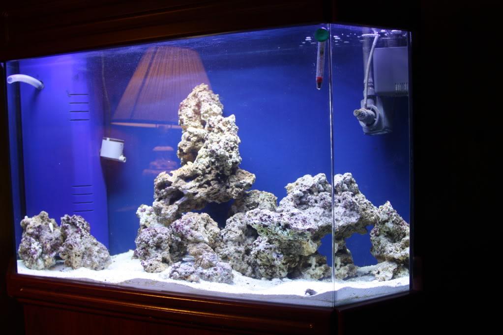Corals for beginners? Fishtanks4-22-10001