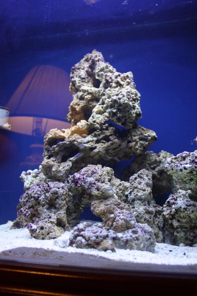 Corals for beginners? Fishtanks4-22-10006