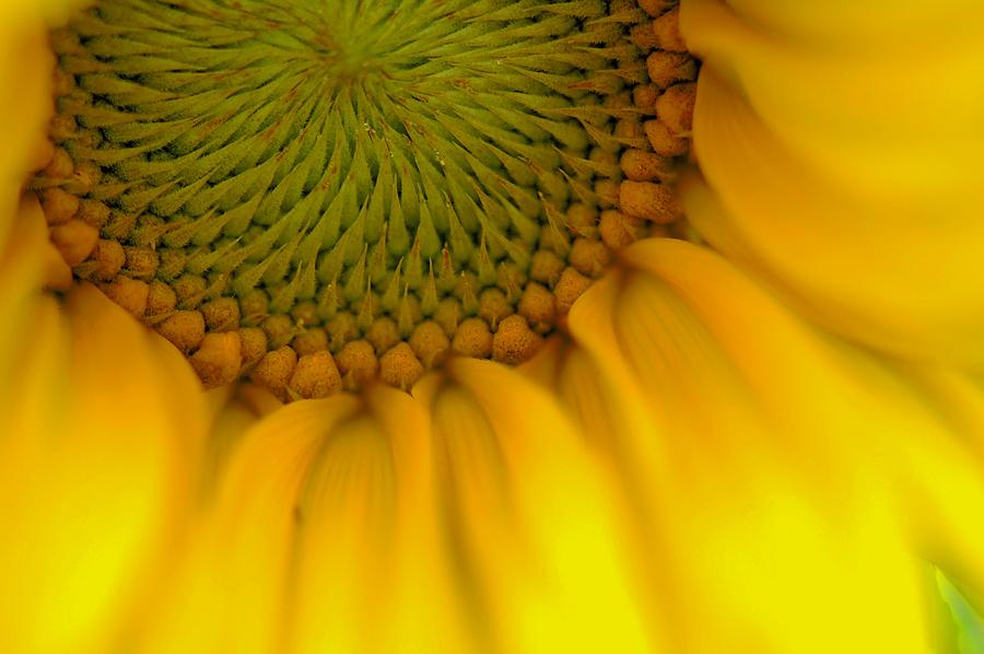 photo macro-fleurs_zps6985041a.jpg