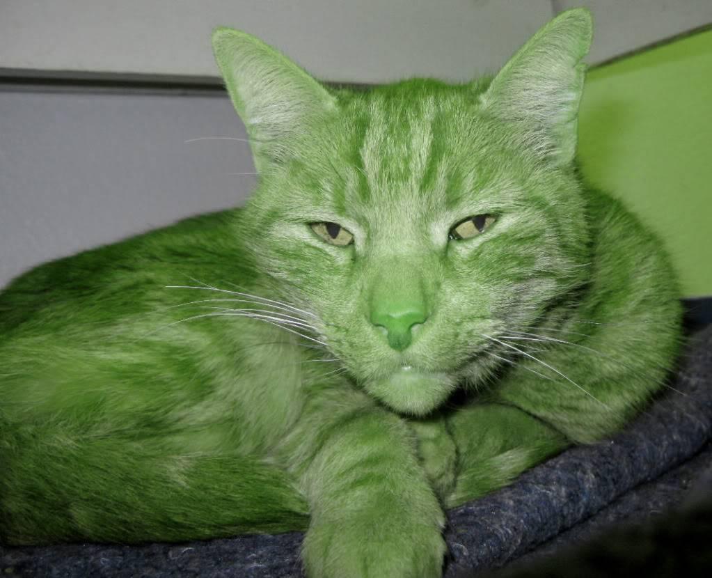 Happy St Patrick's Day Cat693E2X1