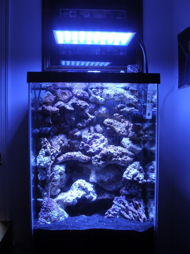 Samantha's 47 Gallon Macroalgae DT DSC05218
