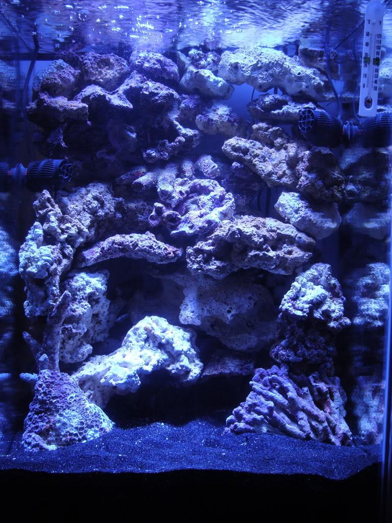 Samantha's 47 Gallon Macroalgae DT DSC05226