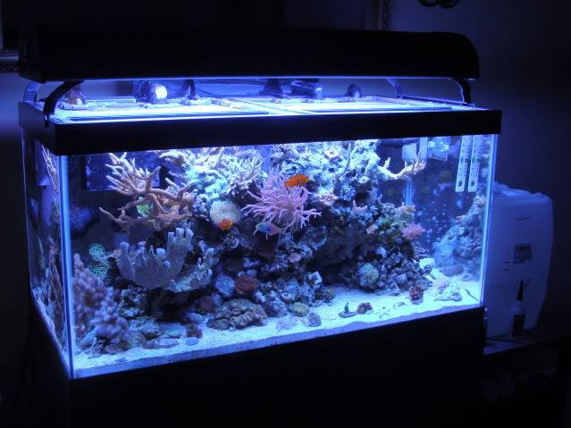FS: 50 Gallon Aquarium w/ Stand, Sump, LR, Sand, and MORE! DSC07035_2