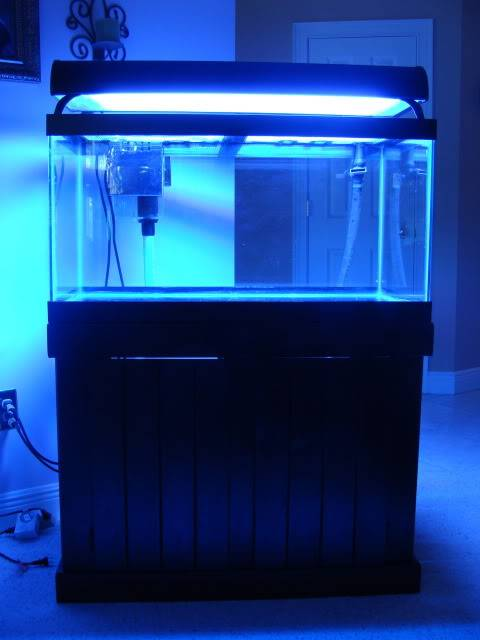 FS: 50 Gallon Aquarium w/ Stand, Sump, LR, Sand, and MORE! DSC09447-1