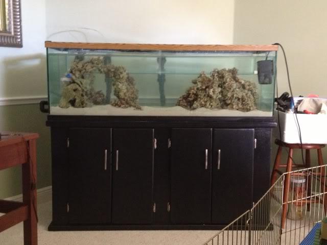 Samantha's 100 Gallon Mixed Reef IMG_0051