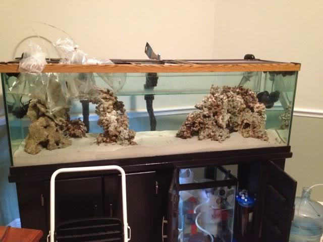 Samantha's 100 Gallon Mixed Reef IMG_0191