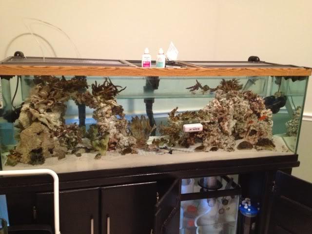Samantha's 100 Gallon Mixed Reef IMG_0200