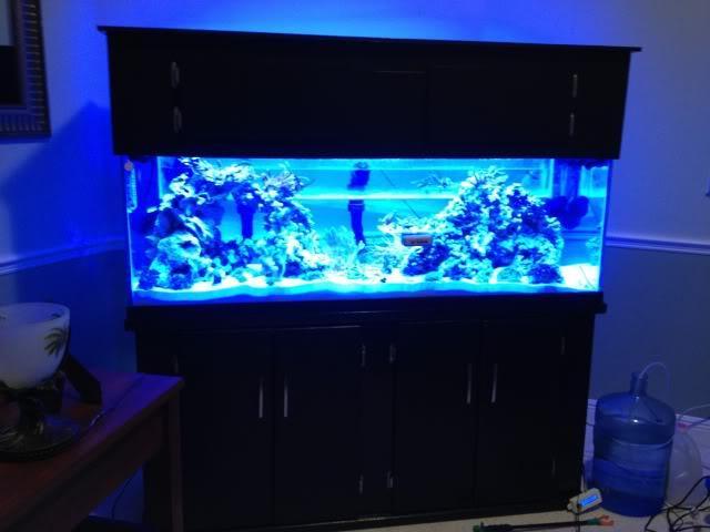 Samantha's 100 Gallon Mixed Reef IMG_0206