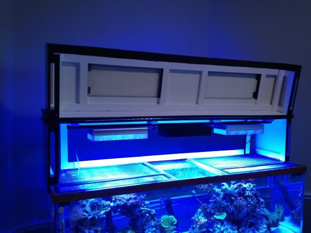 Samantha's 100 Gallon Mixed Reef IMG_0331