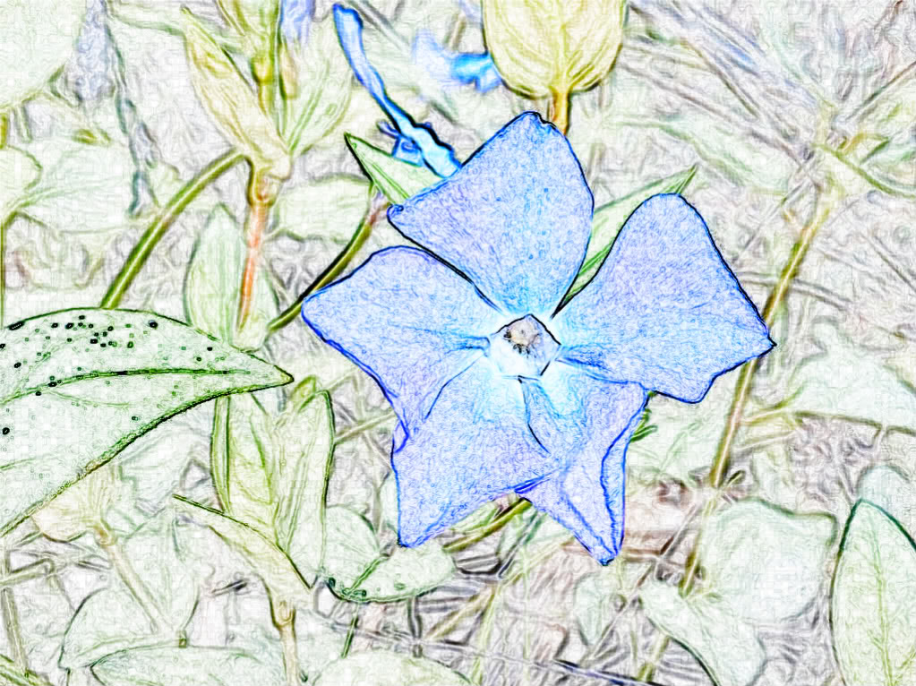 blue Orchid 100_0117-1