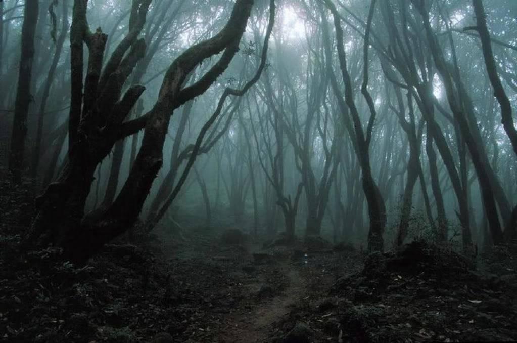 Nightpack Territory Dark_Forest