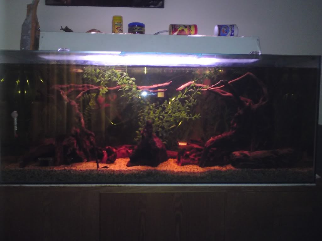 Hi thought id post some pics up for yas of my L104 tank DSC00266