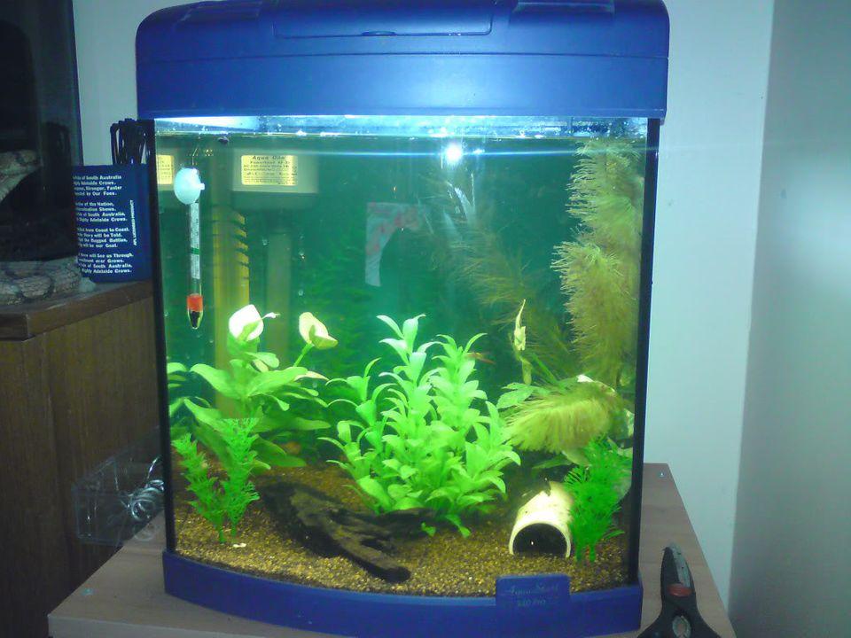FS: misc fish, plecs, tanks (SA) Aqua1340pro-40L