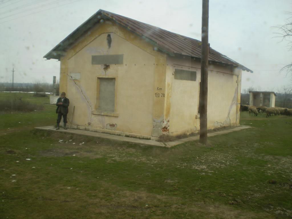 907 : Rosiori Nord - Costesti - Pagina 4 P1010023-1