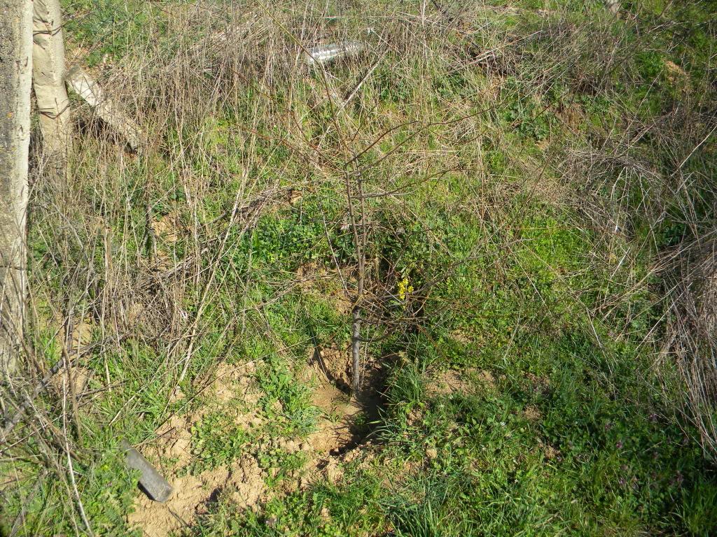 sadnja u prirodi. DSCN3012