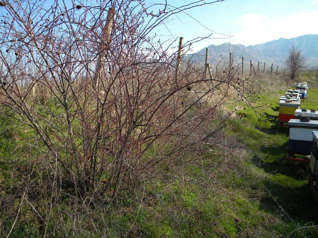 sadnja u prirodi. DSCN3014