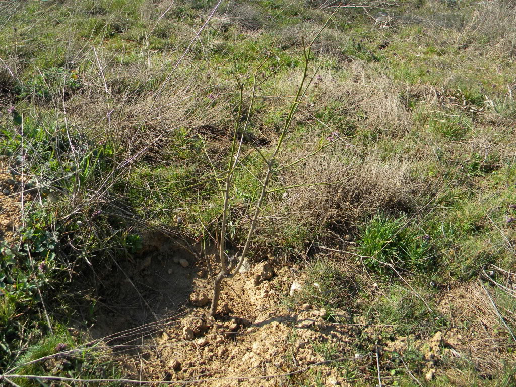 sadnja u prirodi. DSCN3018