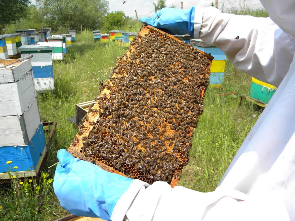 Pčelarstvo - Page 6 DSCN4221