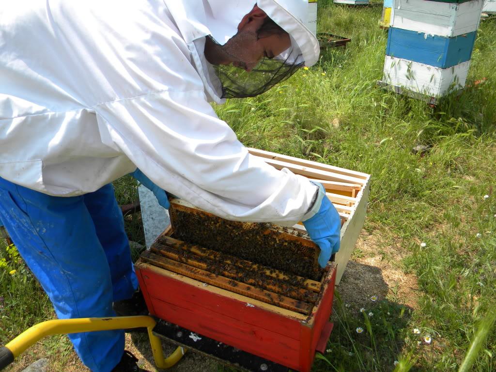 Pčelarstvo - Page 6 DSCN4223