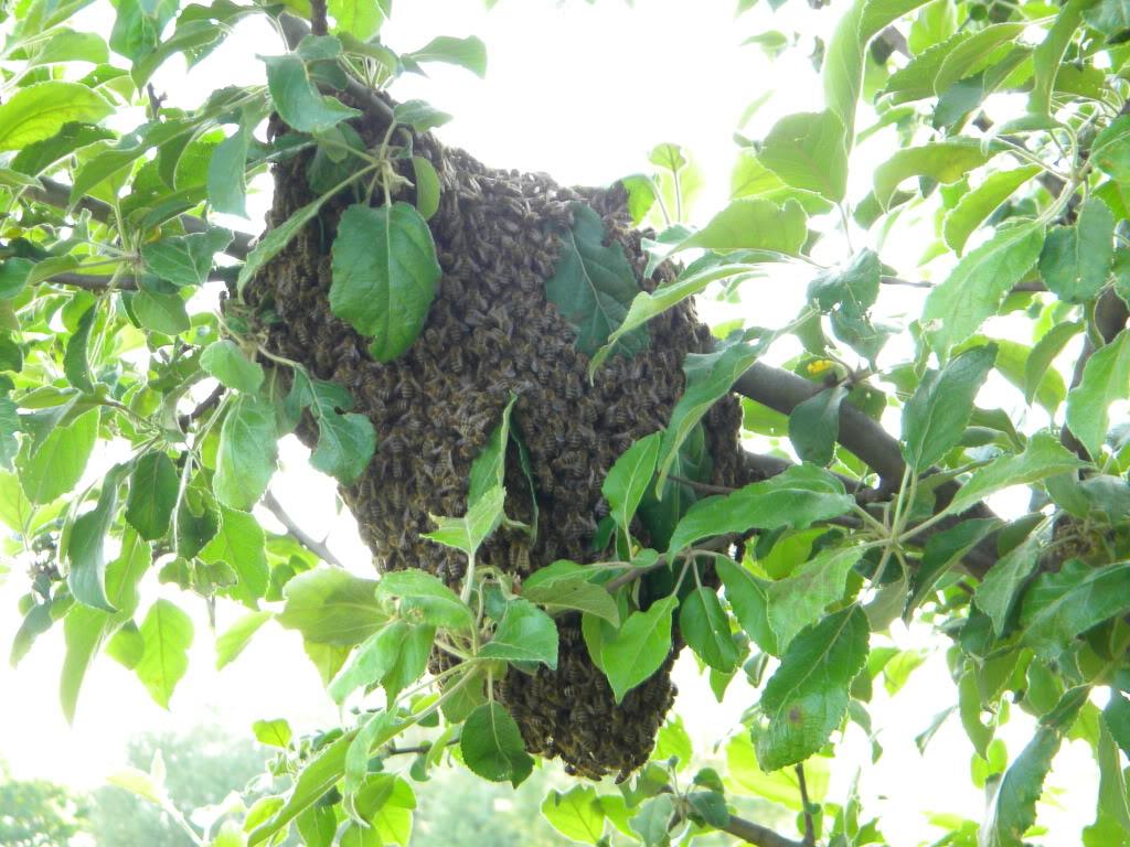 Pčelarstvo - Page 6 DSCN4230