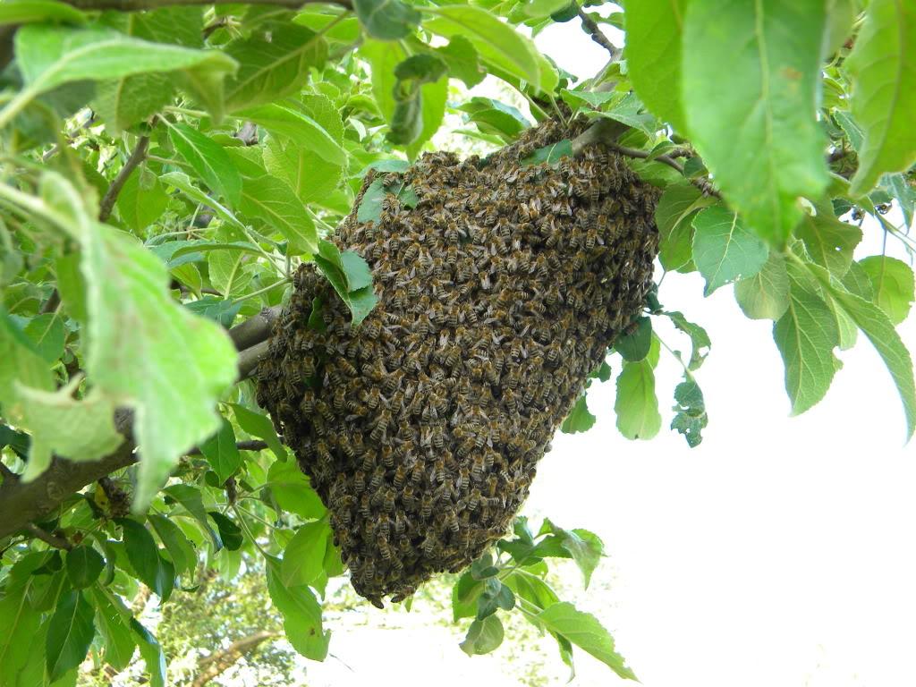 Pčelarstvo - Page 6 DSCN4232