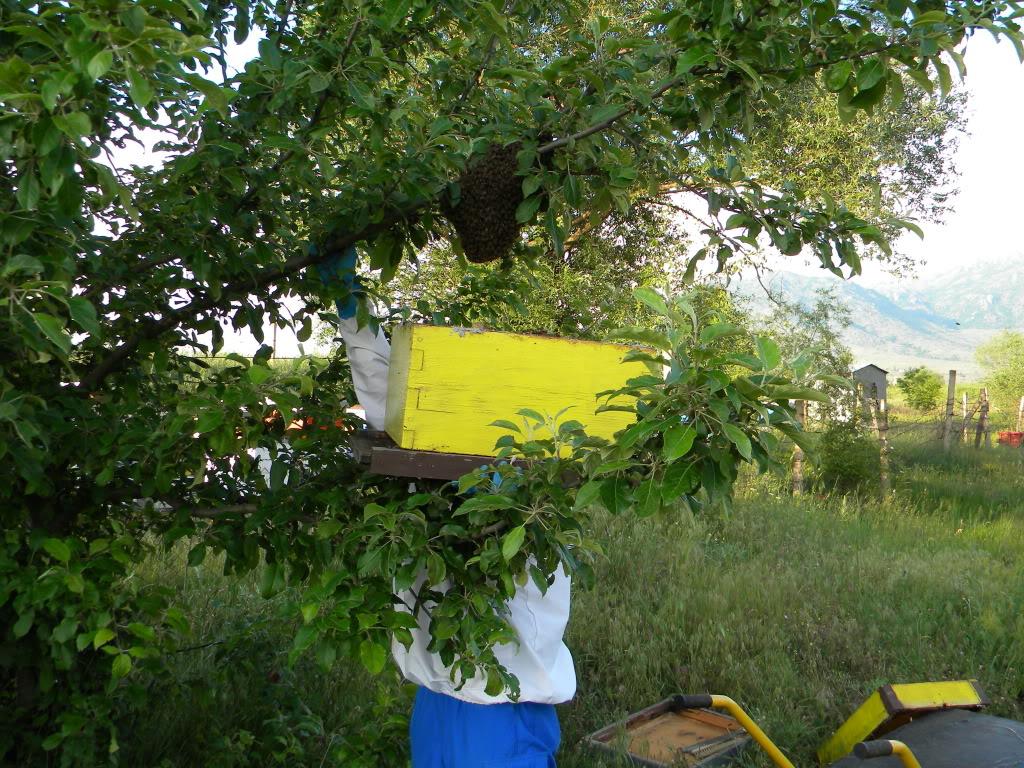 Pčelarstvo - Page 6 DSCN4237