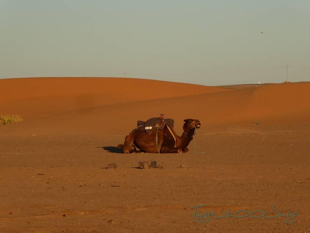 photo Marrocos 1028_zpsgjm1mqbv.jpg
