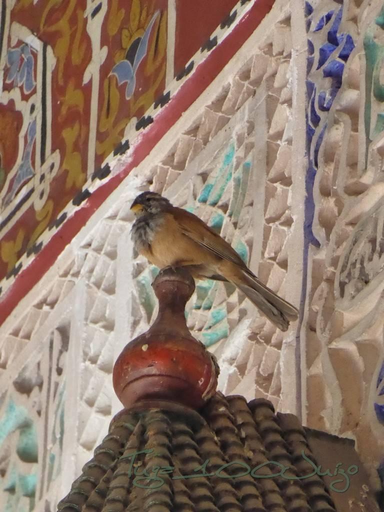 photo Marrocos 1951_zpse9bhmqq9.jpg