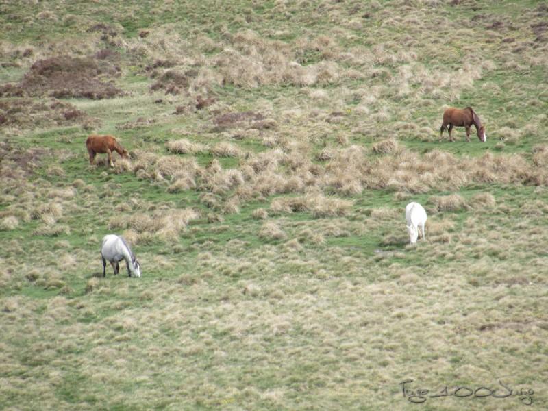 Picos - Sanabria e Picos da Europa - mais um passeio de sonho - Página 2 MonsantoSanabriaePicosdaEuropa2014445_zps3f50bc1c