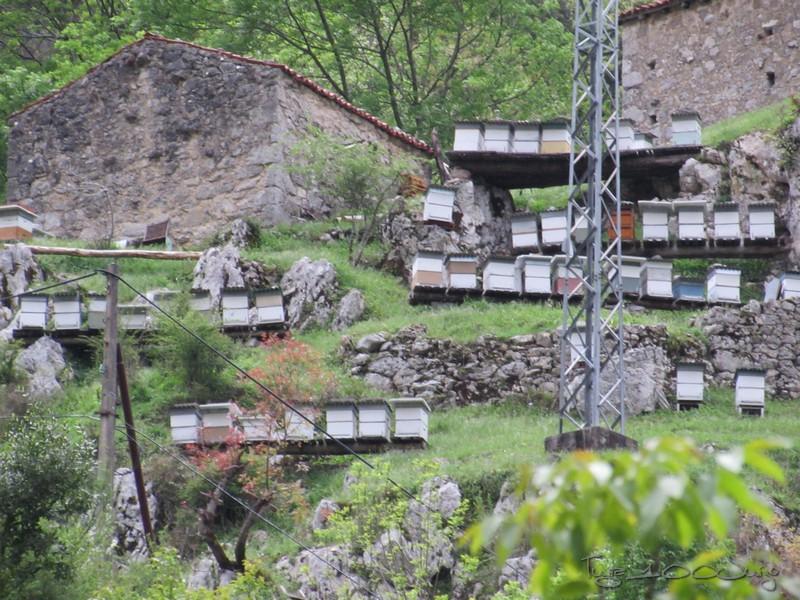 Europa - Sanabria e Picos da Europa - mais um passeio de sonho - Página 3 MonsantoSanabriaePicosdaEuropa2014795_zpse8b02932