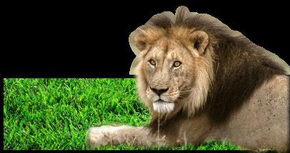 Tosca's Renders. Lion