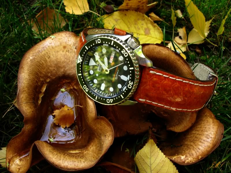 du cuir sur une Diver?.. IMG_4655